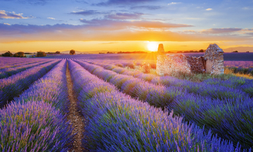 france-provence-heather-sunset-small