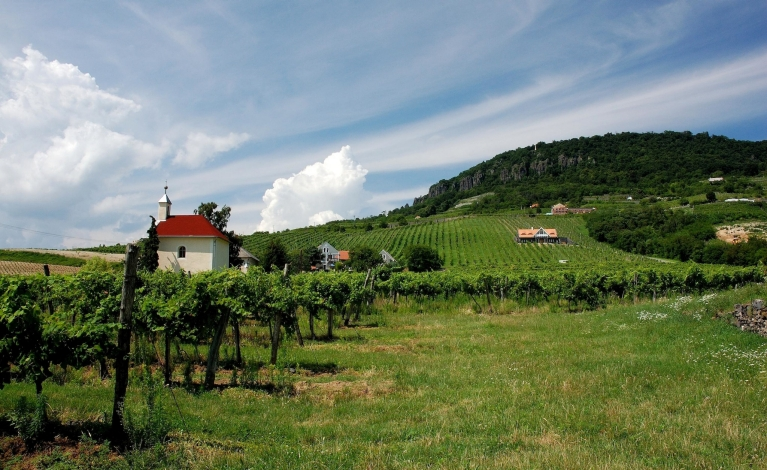 Vineyard in Balaton region